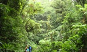 Discover Martinique's natural beauty—on foot